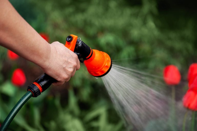 garden hose watering red flowers